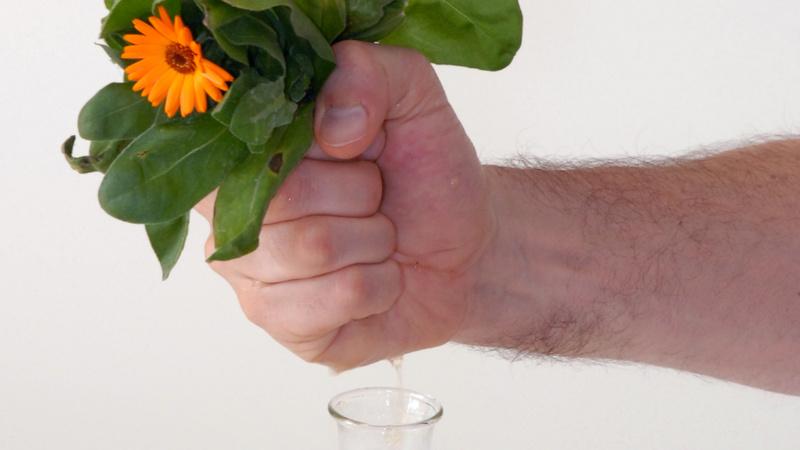 Eine Männerhand presst das Ringelblumen-Öl in ein Glas.