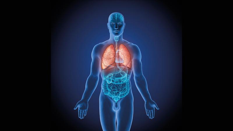 Die Lunge atmet   vitagate