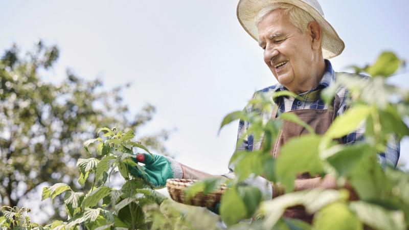 Ein älterer Mann mit Sonnenhut im Garten.