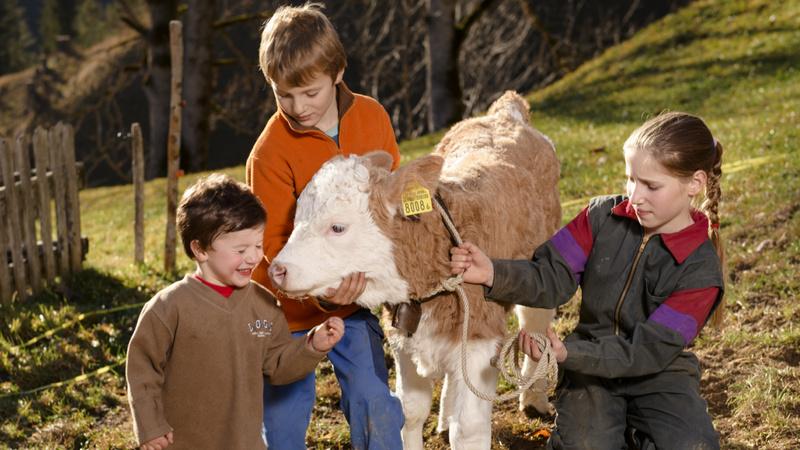 Allergien; Allergene; Hygiene: Drei Kinder auf einem Bauernhof liebkosen ein Kälbchen