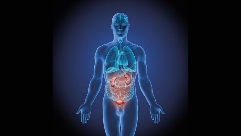 Die Nieren Entsorgen Abfall Vitagate