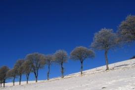 Il faut penser à l'apparition du rhume des foins en hiver déjà.